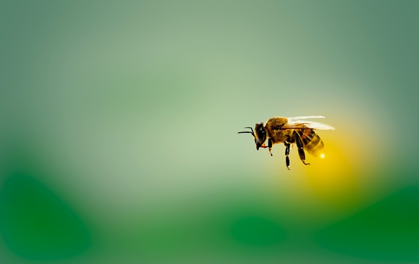 Обнаружена способность пчел очищать воздух от микропластика