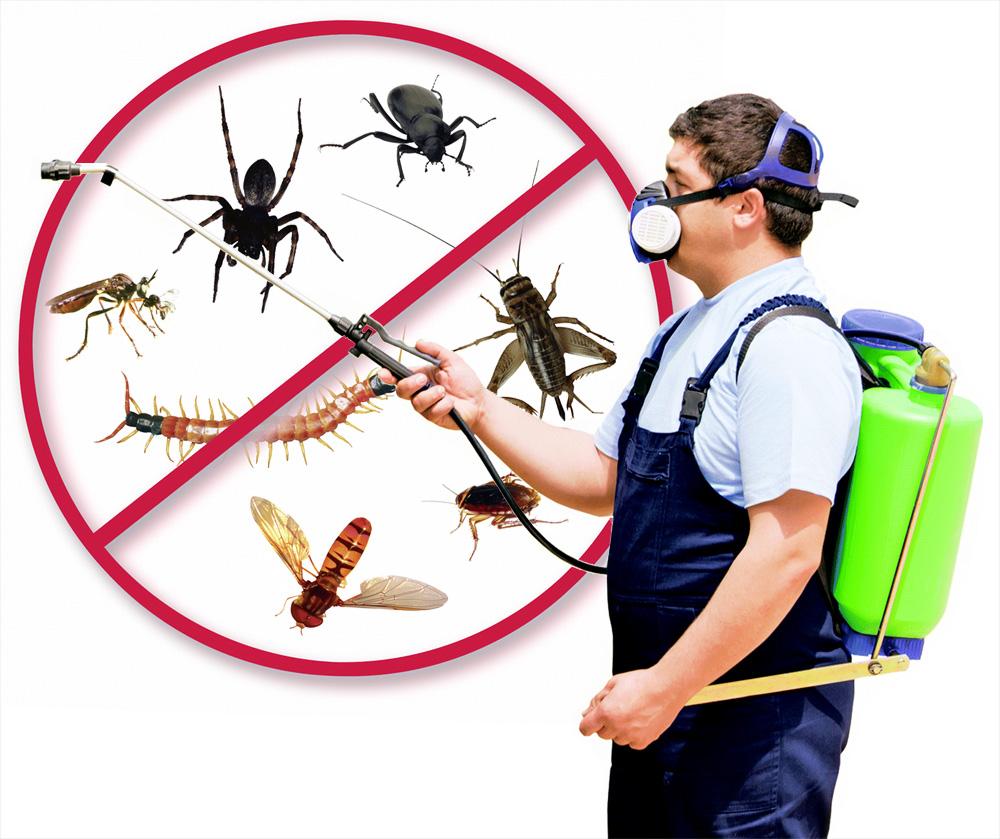 Для чего проводить пест-контроль вредителей?