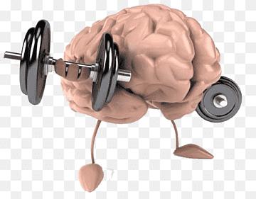 Как тренировать память и мозг